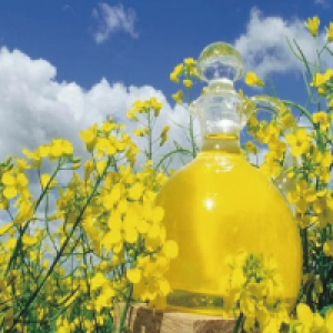 Fermented Rapeseed Oil